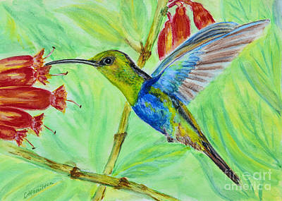 Painting - Watercolor Hummingbird by Olga Hamilton