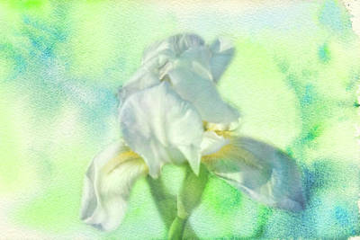 Photograph - Watercolor Iris by Joan Bertucci