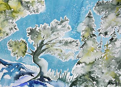 Painting - Watercolor - Limber Pine At Dream Lake by Cascade Colors