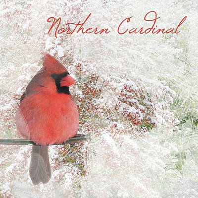 Photograph - Watercolor Northern Cardinal Photograph by Heidi Hermes