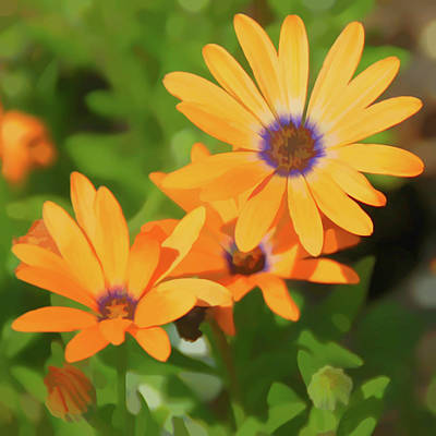 Yellow Flower Photograph - Watercolor Orange Daisy by Aimee L Maher Photography and Art Visit ALMGallerydotcom