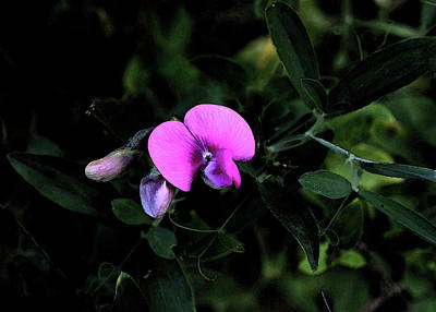 Photograph - Watercolor Orchid by Karen Harrison
