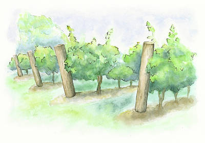 Niagara On The Lake Painting - Watercolor Painting Of A Vineyard by Andrea Hill