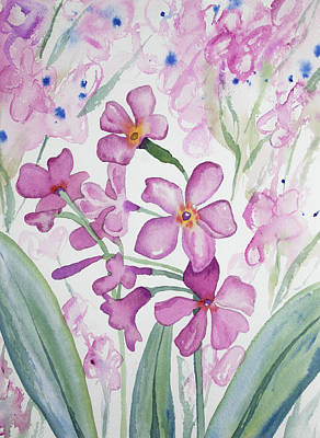 Painting - Watercolor - Parry's Primrose Flowers by Cascade Colors