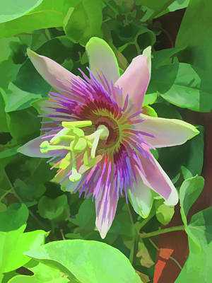Photograph - Watercolor Passion Flower 5 by Aimee L Maher Photography and Art Visit ALMGallerydotcom