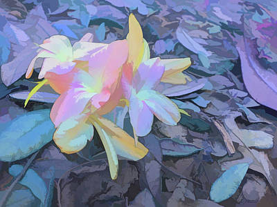 Photograph - Watercolor Pastel Petals by Aimee L Maher Photography and Art Visit ALMGallerydotcom