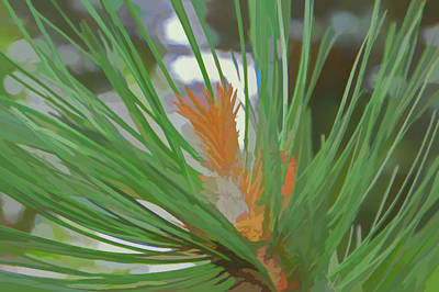 Photograph - Watercolor Pine Needles by Aimee L Maher Photography and Art Visit ALMGallerydotcom