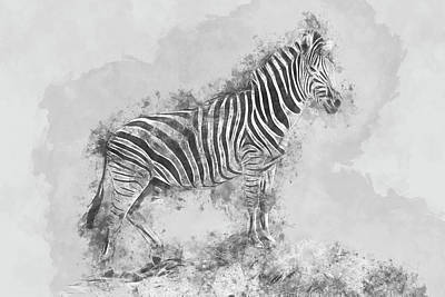 Digital Art - Watercolor Plains Zebra by Petrus Bester