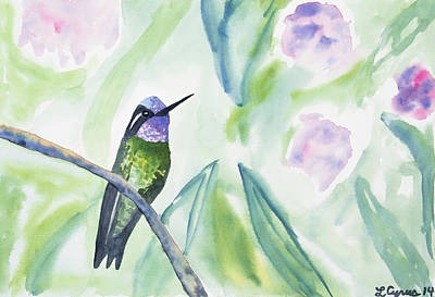 Painting - Watercolor - Purple-throated Mountain Gem by Cascade Colors