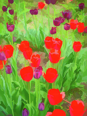 Photograph - Watercolor Red And Purple Tulips by Aimee L Maher ALM GALLERY