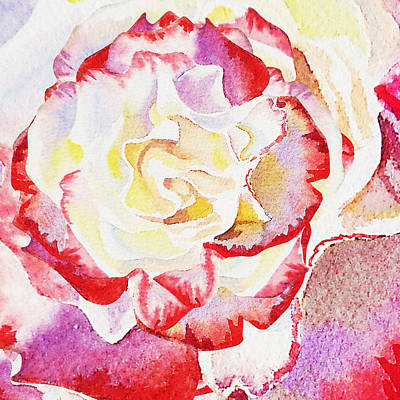 Painting - Watercolor Rose Close Up  by Irina Sztukowski