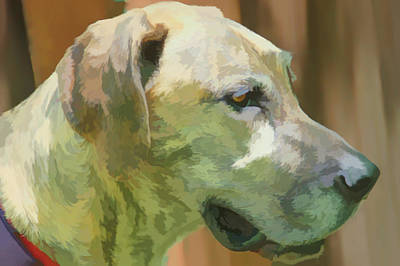 Watercolor Pet Portraits Photograph - Watercolor Sammy by Aimee L Maher Photography and Art Visit ALMGallerydotcom