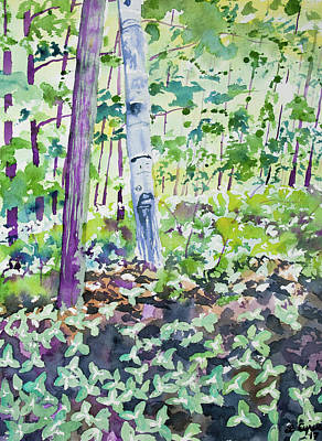 Painting - Watercolor - Spring Trillium In The Forest by Cascade Colors