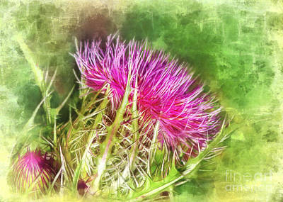 Photograph - Watercolor Thistle by Judi Bagwell