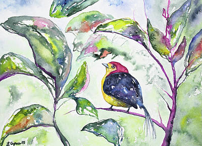 Painting - Watercolor - Wire-tailed Manakin In The Rainforest by Cascade Colors