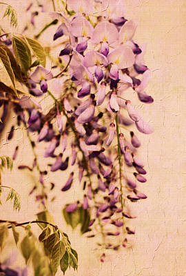 Photograph - Watercolor Wisteria by Jessica Jenney