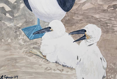 Painting - Watercolor - Young Blue-footed Boobies by Cascade Colors