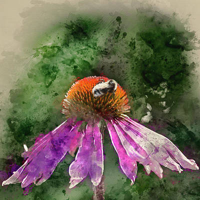 Watercolour Painting Of Bumble Bee Pollenating On Echinacea Pall Art Print