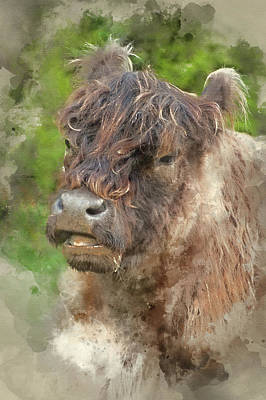 Watercolour Painting Of Highland Cattle Cow Breed  Art Print