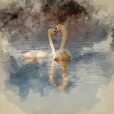 Water Filter Photograph - Watercolour Painting Of Pair Of Beautiful Mated Mute Swans Formi by Matthew Gibson