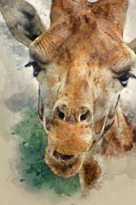 Filtered Painting - Watercolour Painting Of Portrait Of Giraffe  by Matt Gibson