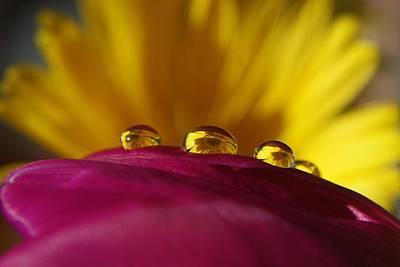 Nederland Digital Art - Waterdrop On A Flower by Ralph Klein