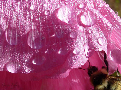 Photograph - Waterdrops by George Tuffy