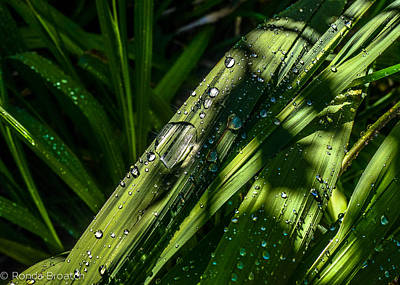Photograph - Watered by Ronda Broatch