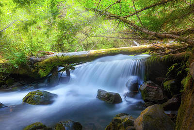 Wall Art - Photograph - Waterfall Along Cold Spring Creek In Oregon by David Gn