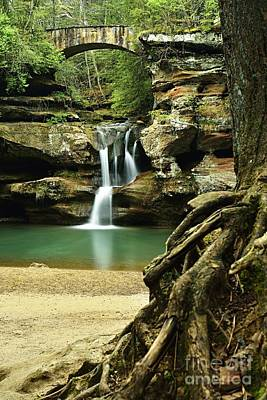 Photograph - Waterfall And Roots by Larry Ricker