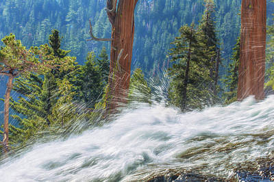 Photograph - Waterfall And Trees by Marc Crumpler