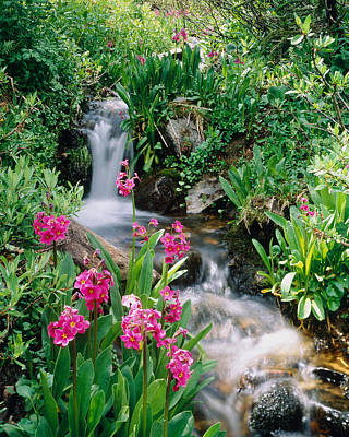 Flower Blooms Photograph - Waterfall Co Usa by Panoramic Images