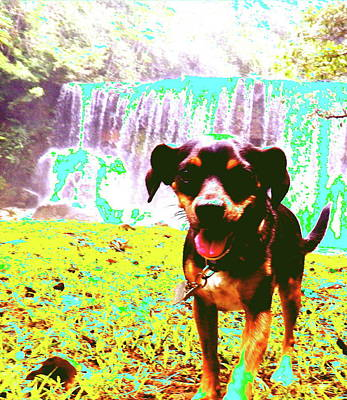 Digital Art - Waterfall Dog by Erika Swartzkopf