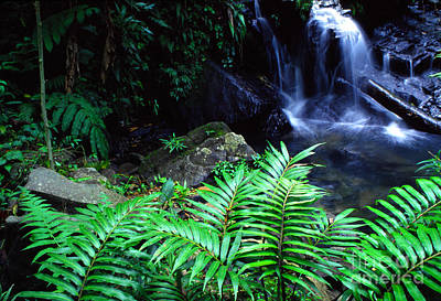 Just Desserts - Waterfall El Yunque National Forest by Thomas R Fletcher
