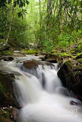 Photograph - Waterfall In The Forest by Jill Lang