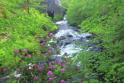 Photograph - Waterfall Rhododendron And Sawmill Moore State Park by John Burk