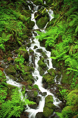 Photograph - Waterfall Through The Ferns by Rick Strobaugh