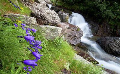Waterfalls And Bluebells Art Print
