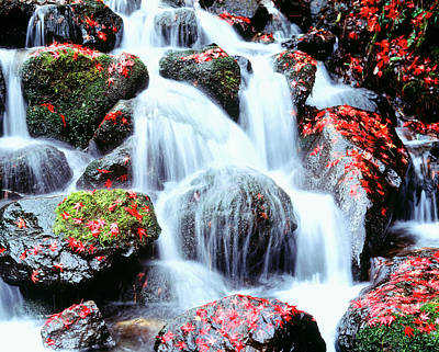 Fallen Leaf Photograph - Waterfalls Kyoto Japan by Panoramic Images