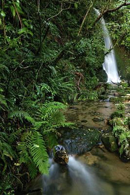 Photograph - Waterfalls, New Zealand by Les Cunliffe