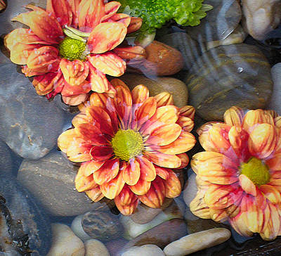 Photograph - Waterflowers by Kathy Bassett