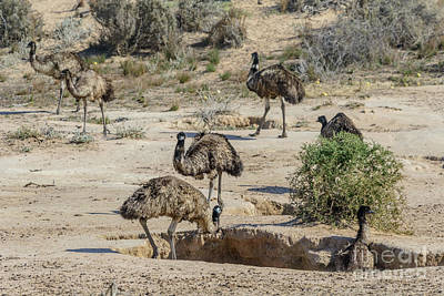 Photograph - Watering Holes 01 by Werner Padarin