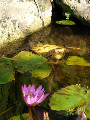 Waterlilies 2 Art Print by Donna McLarty