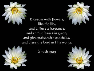 Photograph - Waterlilies And Sirach Quote From Bible by Rose Santuci-Sofranko