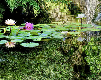 Photograph - Waterlilies And Waterfall At Zilker Park by Michael Ziegler