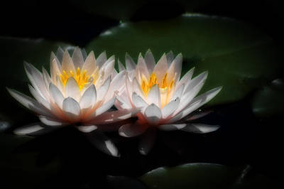 Photograph - Waterlilies In Moonglow by Lynne Jenkins
