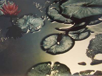 Photograph - Waterlillies Ames Pond Deer Isle Maine by Anastasia Savage Ealy