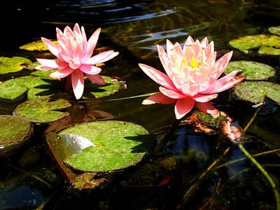 Artist Working Photograph - Waterlillies by Laurette Escobar