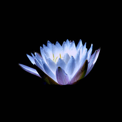 Photograph - Waterlily 2 by David Weeks