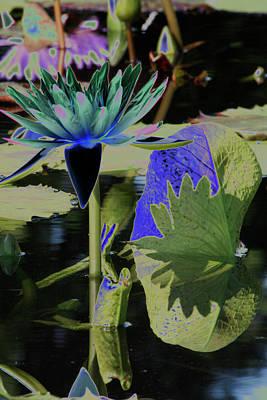 Photograph - Waterlily 8 by Susan Garrett